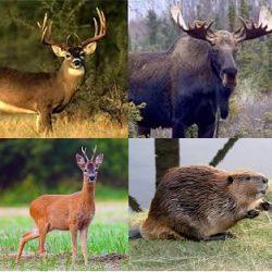 Охота другие